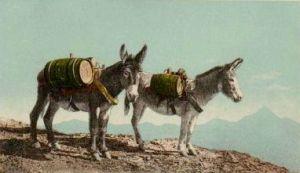 DonkeyPostcard1